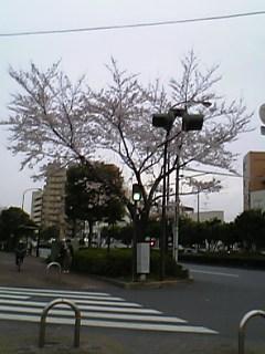 image/torihitori-2006-03-26T17:22:36-1.jpg